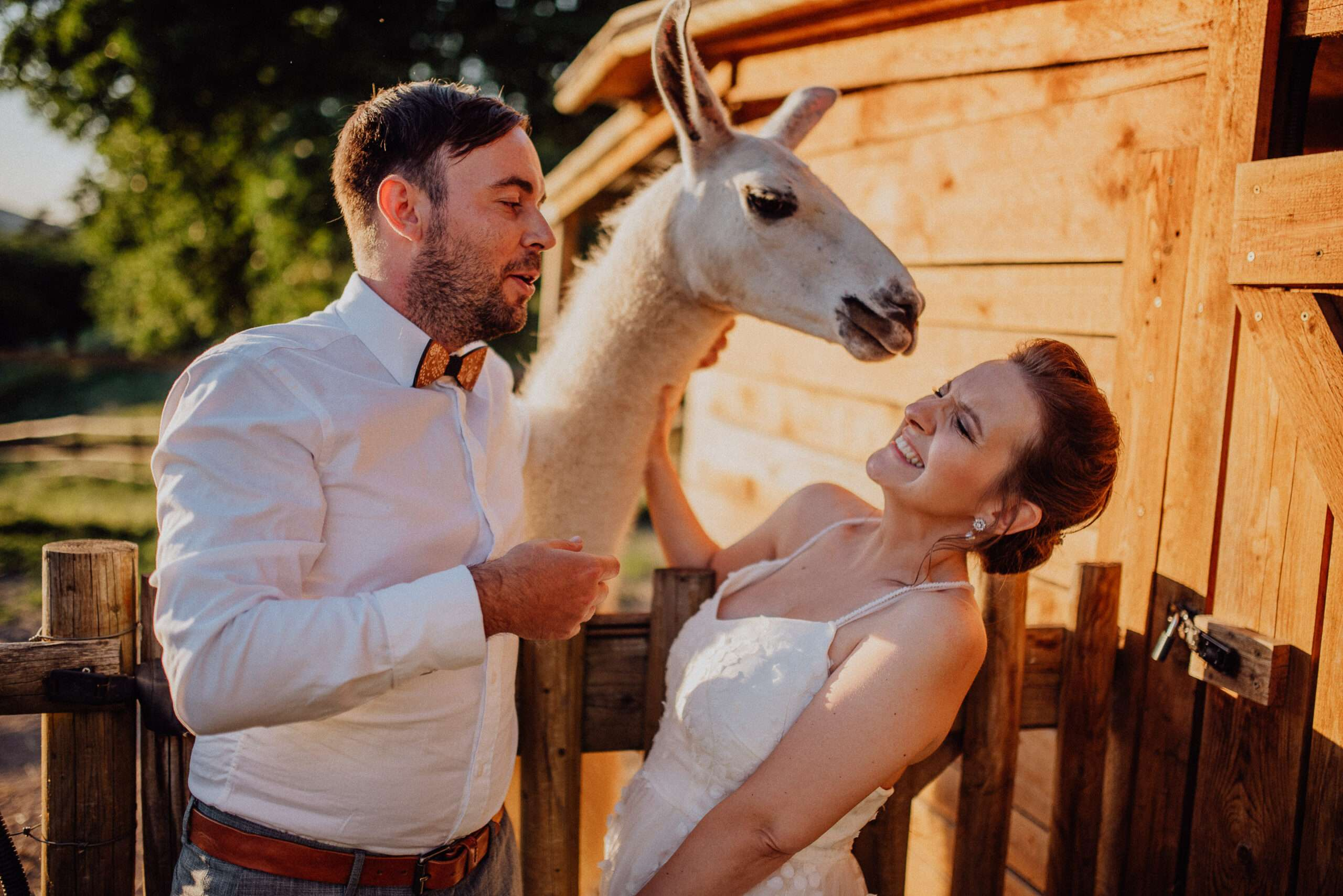 Novomanželé se fotí s lamou Statek Samsara Blansko